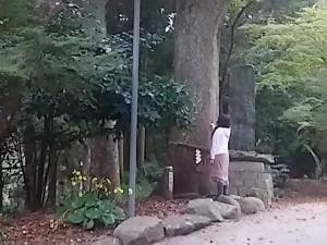 志賀海神社の御神木