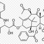 タキソール(抗がん剤治療)原料【イチイ】の成分やエネルギーについての考察
