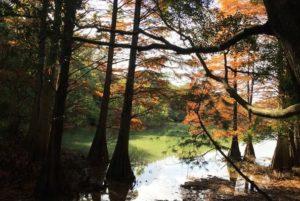 篠栗九大の森紅葉