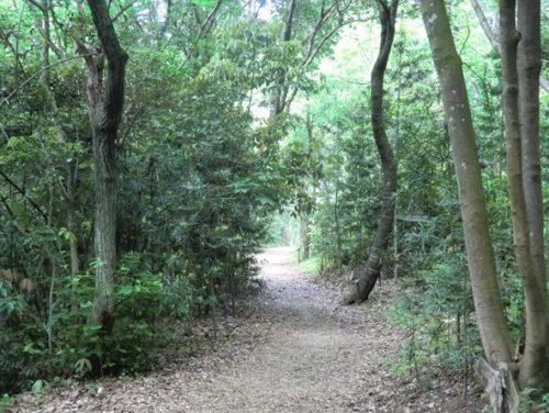 九大の森遊歩道