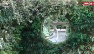 うめきたガーデン 植物の壁